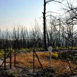Post Wildfire Photos