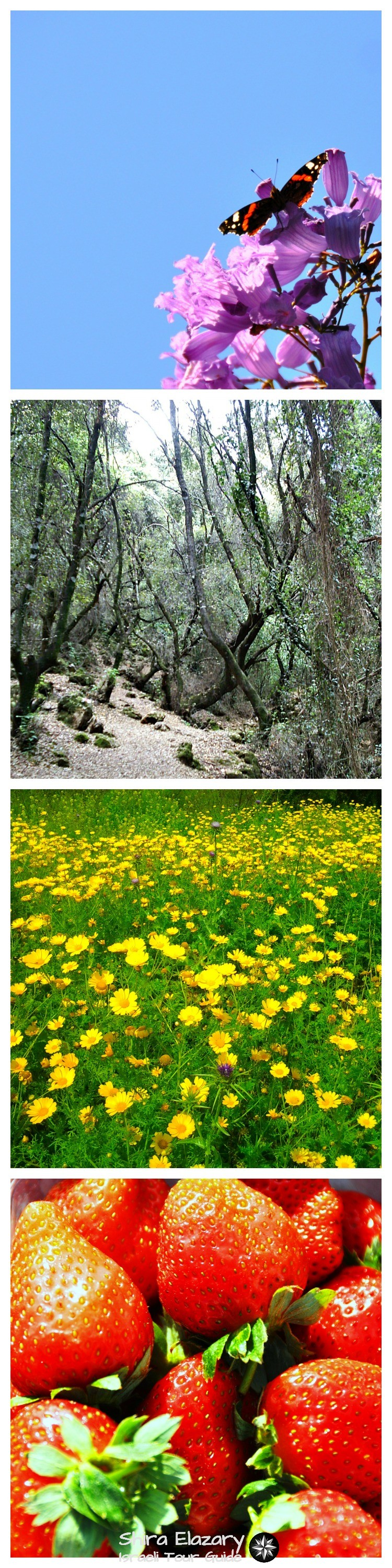 Four photos depicting scenes of nature typical to Israel